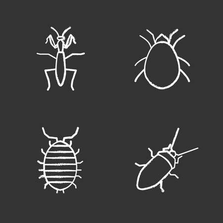 Insects chalk icons set. Mantis, cockroach, woodlice, mite. Isolated vector chalkboard illustrations