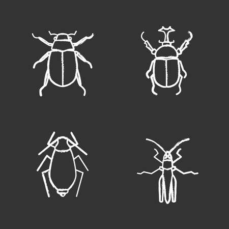 Insects chalk icons set. Chafer, Hercules beetle, aphid, grasshopper. Isolated vector chalkboard illustrations. Illustration