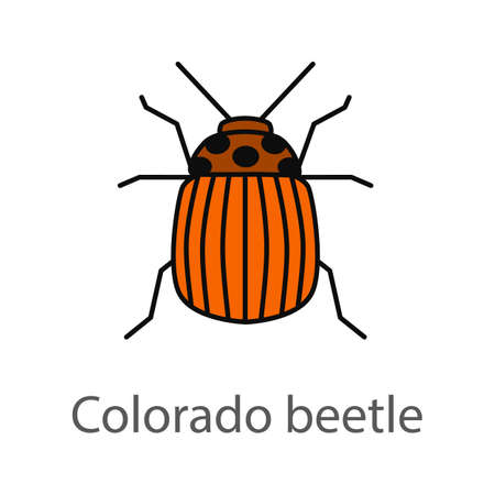 Colorado beetle color icon. Insect pest. Potato bug. Isolated vector illustration Banque d'images - 97250441