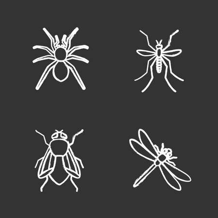 Insects chalk icons set vector illustration