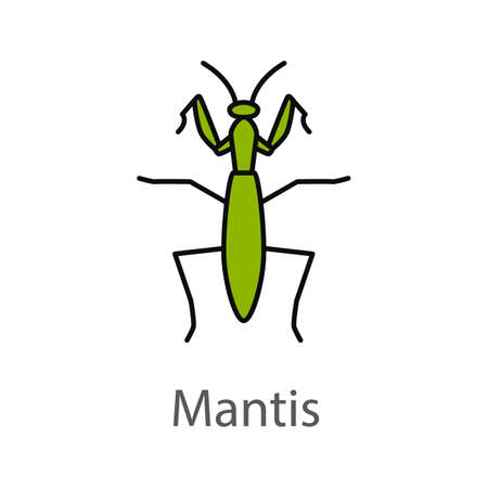 Praying mantis color icon. Mantodea. Insect. Isolated vector illustration