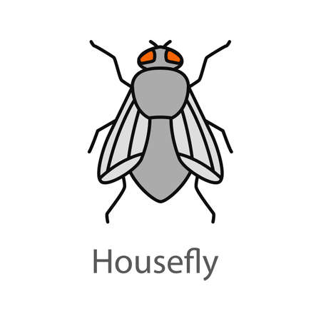 Housefly color icon. Musca domestica. Fly insect. Isolated vector illustration