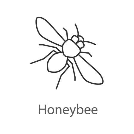 Honey bee linear icon. Insect. Thin line illustration. Contour symbol. Vector isolated outline drawing.