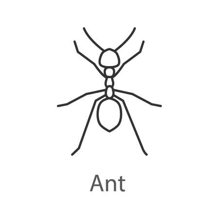 Ant linear icon.