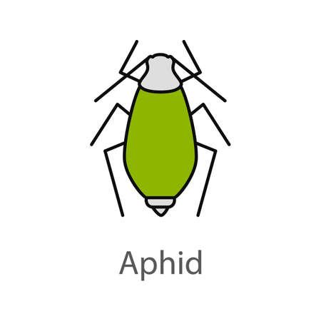 Illustration of a green aphid icon on a white background