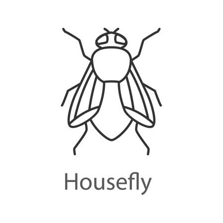 Housefly linear icon. Insect. Thin line illustration. Fly insect Contour symbol. Vector isolated outline drawing