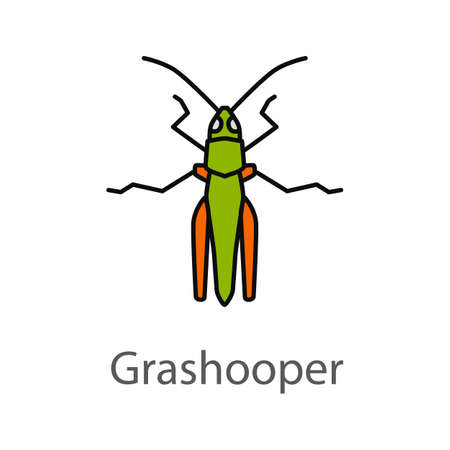 Grasshopper color icon. Insect pest. Locusts. Isolated vector illustration