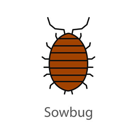 Woodlouse color icon. Roll up bug. Sowbug. Isolated vector illustration