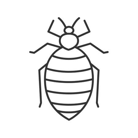Bed bug linear icon. Insect pest. Thin line illustration. Human parasite. Contour symbol. Vector isolated outline drawing