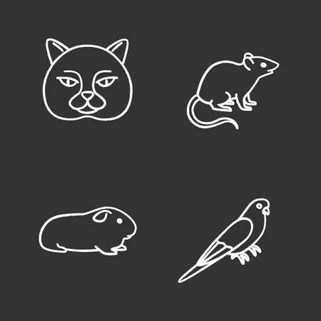 Pets chalk icons set. British cat, mouse, cavy, budgerigar. Isolated vector chalkboard illustrations Stock Illustratie