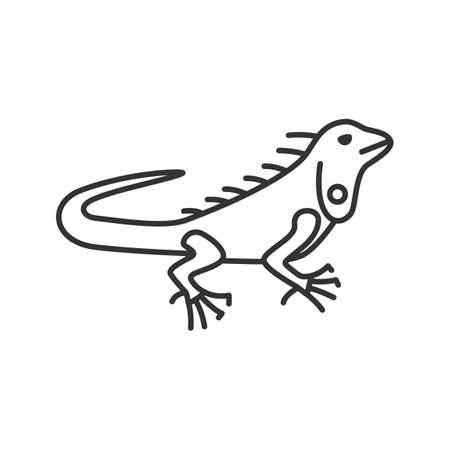 Iguana linear icon. Thin line illustration. Herbivorous lizard. Contour symbol. Vector isolated outline drawing