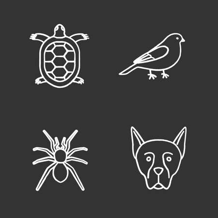 Pets chalk icons set. Tortoise, canary, spider, Doberman Pinscher. Isolated vector chalkboard illustrations Çizim