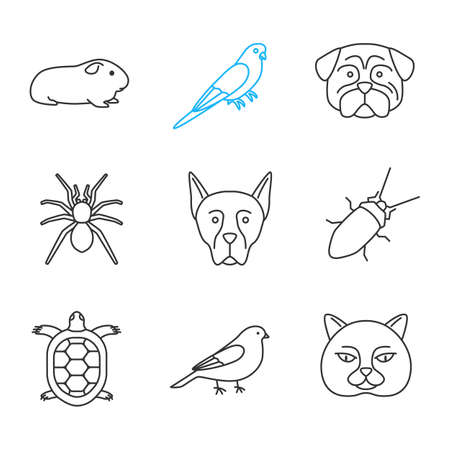 Pets linear icons set. Cavy, budgerigar, pug, spider, doberman pinscher, cockroach, tortoise, canary, British cat. Thin line contour symbols. Isolated vector outline illustrations Çizim