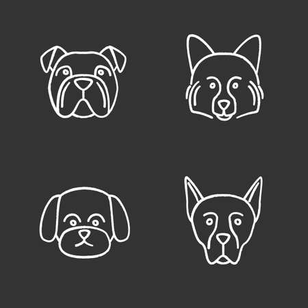 Dogs breeds chalk icons set. English bulldog, German Spitz, Maltese, Doberman Pinscher. Isolated vector chalkboard illustrations