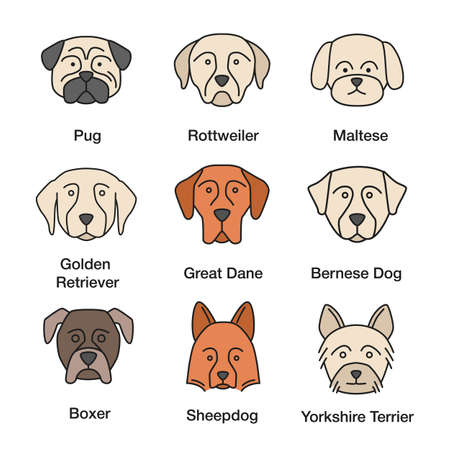 Dogs breeds color icons set. Pug, Rottweiler, Maltese, Golden Retriever, Great Dane, Bernese Mountain Dog, Shetland Sheepdog, boxer, Yorkshire Terrier. Isolated vector illustrations