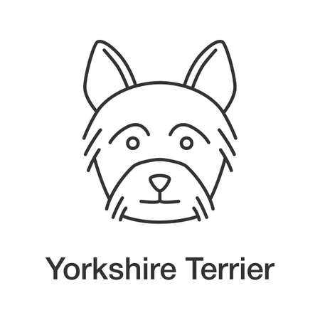 Yorkshire Terrier linear icon. Yorkie. Thin line illustration. Dog breed. Contour symbol. Vector isolated outline drawing Illustration