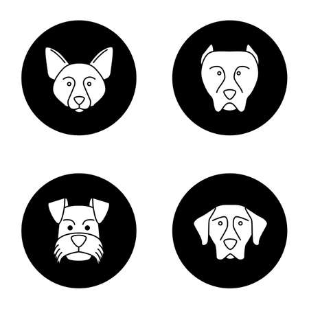 Dogs breeds glyph icons set. Border Collie, pit bull, Miniature Schnauzer, German Shorthaired Pointer. Vector white silhouettes illustrations in black circles