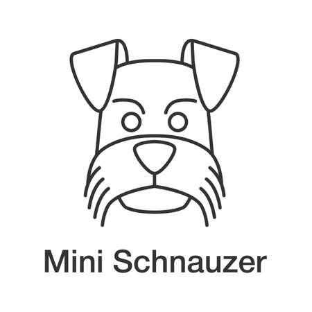 Miniature schnauzer linear icon. Thin line illustration. Zwergschnauzer. Contour symbol. Vector isolated outline drawing