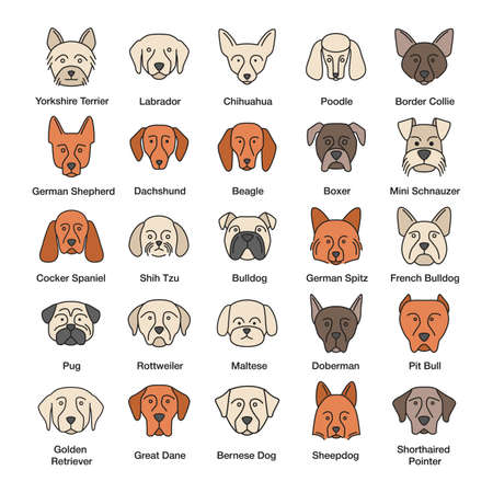 Dogs breeds color icons set. Guide, guardian, hunting, herding dogs. Isolated vector illustrations