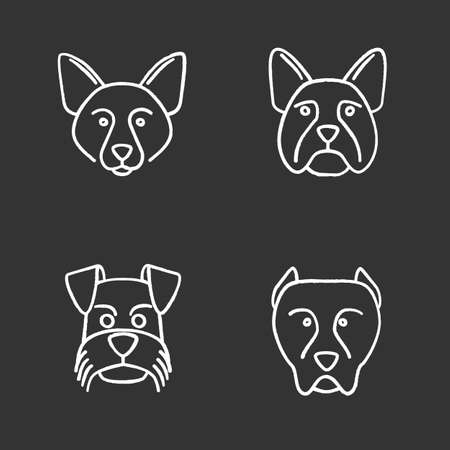 Dogs breeds chalk icons set. Border Collie, French Bulldog, Miniature Schnauzer, German Shorthaired Pointer. Isolated vector chalkboard illustrations