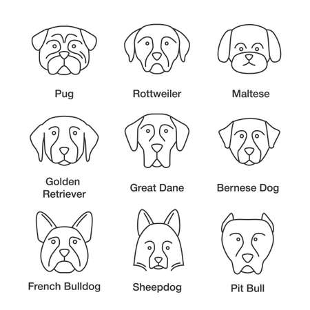 Dogs breeds linear icons set. Thin line contour symbols. Pug, Rottweiler, Maltese, Golden Retriever, Great Dane, Bernese Dog, Sheepdog, Bulldog, pit bull. Isolated vector outline illustrations