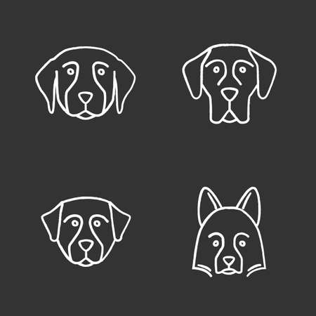 Dogs breeds chalk icons set. Golden Retriever, Great Dane, Bernese Mountain Dog, Shetland Sheepdog. Isolated vector chalkboard illustrations