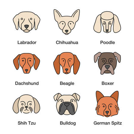 Dogs breeds color icons set. Chihuahua, poodle, beagle, boxer, German Spitz, English Bulldog, dachshund, Labrador Retriever, Shih Tzu. Isolated vector illustrations