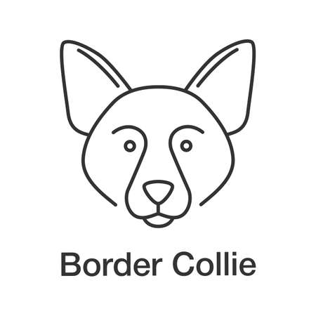 Border collie linear icon. Scottish sheepdog. Thin line illustration. Dog breed. Contour symbol. Vector isolated outline drawing