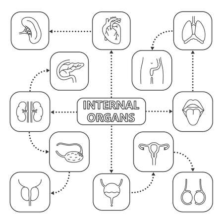 Internal Organs Mind Map With Linear Icons Urinary And Reproductive