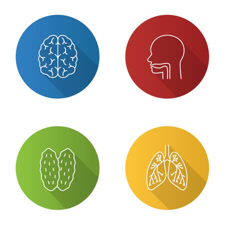 Internal organs flat linear long shadow icons set. Brain, oral cavity, thymus, lungs with bronchi and bronchioles. Vector outline illustration