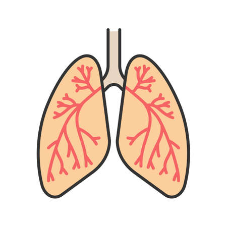 Human lungs with bronchi and bronchioles color icon. Respiratory system anatomy. Isolated vector illustration Stock Illustratie