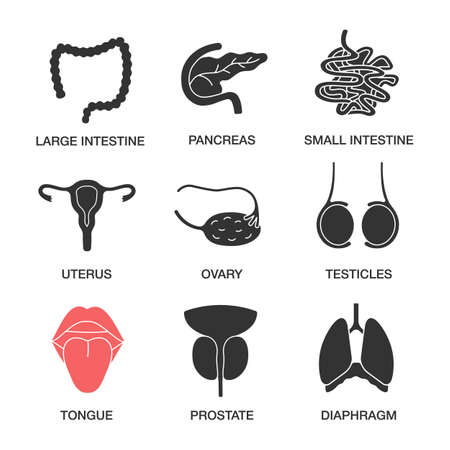 Human internal organs glyph icons set. Large and small intestine, pancreas, uterus, ovary, testicles, tongue, prostate, diaphragm. Silhouette symbols. Vector isolated illustration