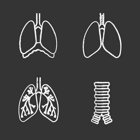 Internal organs chalk icons set. Respiratory system. Trachea, lungs, bronchi, bronchioles, thoracic cavity, diaphragm. Isolated vector chalkboard illustrations
