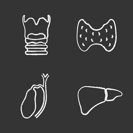 Internal organs chalk icons set. Larynx, thyroid, gallbladder, liver. Isolated vector chalkboard illustrations