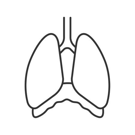 Thoracic cavity linear icon. Diaphragm. Thin line illustration. Human lungs. Contour symbol. Vector isolated outline drawing