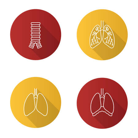 Internal organs flat linear long shadow icons set. Respiratory system. Trachea, lungs, bronchi, bronchioles, thoracic cavity, diaphragm. Vector outline illustration