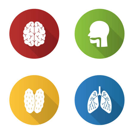 Internal organs flat design long shadow glyph icons set. Brain, oral cavity, thymus, lungs with bronchi and bronchioles.