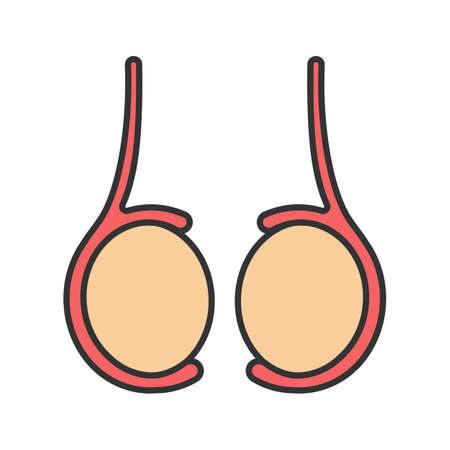Testicles color icon. Testis. Male reproductive gland.
