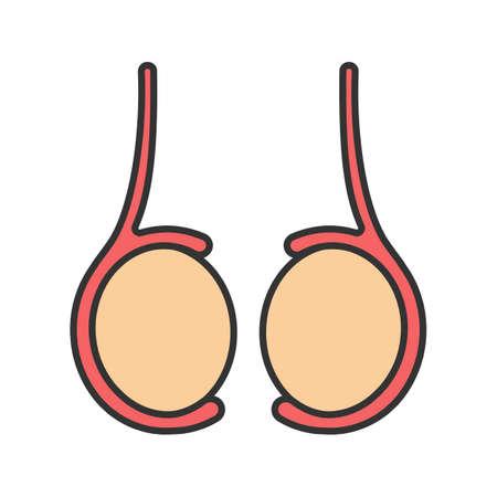 Testicles color icon. Testis. Male reproductive gland.