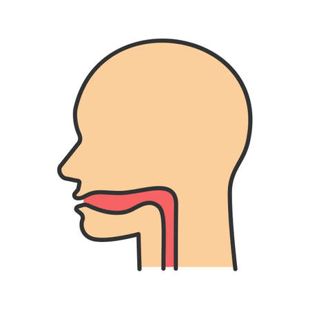 Oral cavity, pharynx and esophagus color icon. Upper section of alimentary canal. Isolated vector illustration
