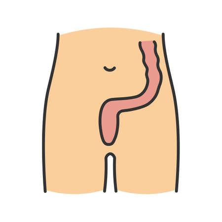 Rectum and anus color icon. Last segment of large bowel. Gastrointestinal tract. Isolated vector illustration