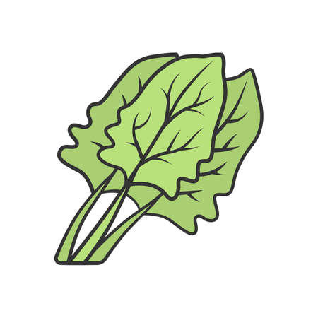 Spinach color icon. Salad ingredient. Agriculture plant. Leaves. Vegetable farm. Organic food. Vegan and vegetarian food. Healthy nutrition. Vitamin. Isolated vector illustration