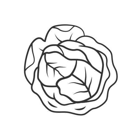 Cabbage linear icon. Agriculture plant. Salad ingredient. Greenery. Organic food. Vegan diet. Vegetable farm. Thin line illustration. Contour symbol. Vector isolated outline drawing. Editable stroke