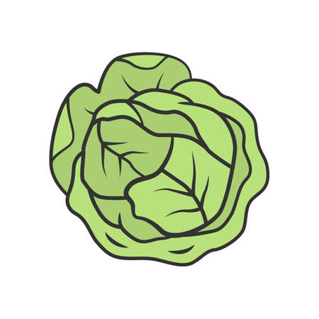 Cabbage color icon. Agriculture plant. Salad ingredient. Greenery. Vitamin. Nutrition. Organic food. Healthy food. Vegetarian and vegan diet. Vegetable farm. Isolated vector illustration Ilustracja