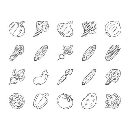 Vegetables linear icons set. Potato, carrot, pepper. Soup and salad ingredients. Vitamin and diet. Healthy nutrition. Thin line contour symbols. Isolated vector outline illustrations. Editable stroke