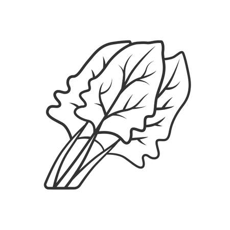 Spinach linear icon. Salad ingredient. Agriculture plant. Leaf. Vegetable farm. Vegan food. Healthy nutrition. Thin line illustration. Contour symbol. Vector isolated outline drawing. Editable stroke Ilustracja