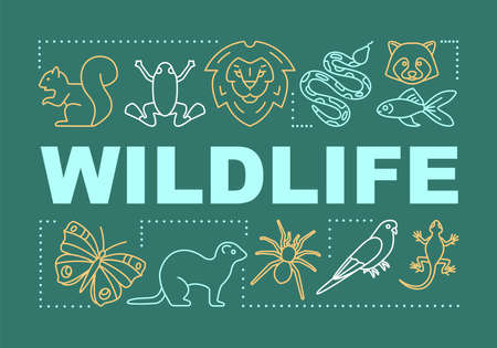 Wildlife word concepts banner. Travel experience. Wild animals observation. Jungle trip. Presentation, website. Isolated lettering typography idea with linear icons. Vector outline illustration