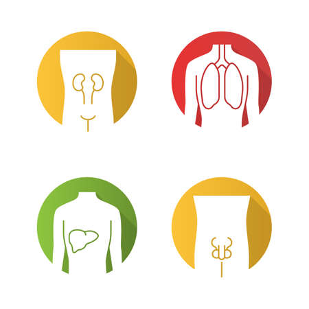 Healthy human organs flat design long shadow glyph icons set. Kidney and liver in good health. Functioning lungs.  Internal body parts in good shape. Vector silhouette illustration  イラスト・ベクター素材