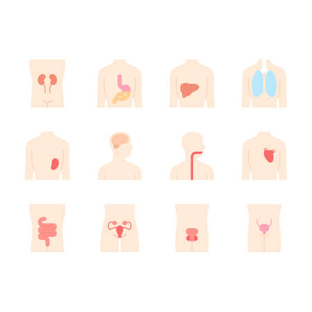 Healthy human organs flat design long shadow color icons set. Throat and lungs in good health. Functioning heart and urinary bladder. Wholesome liver. Vector silhouette illustrations