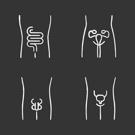 Healthy human organs chalk icons set. Intestines and urinary bladder in good health. Functioning men and women reproductive systems. Fertility. Isolated vector chalkboard illustrations Illustration